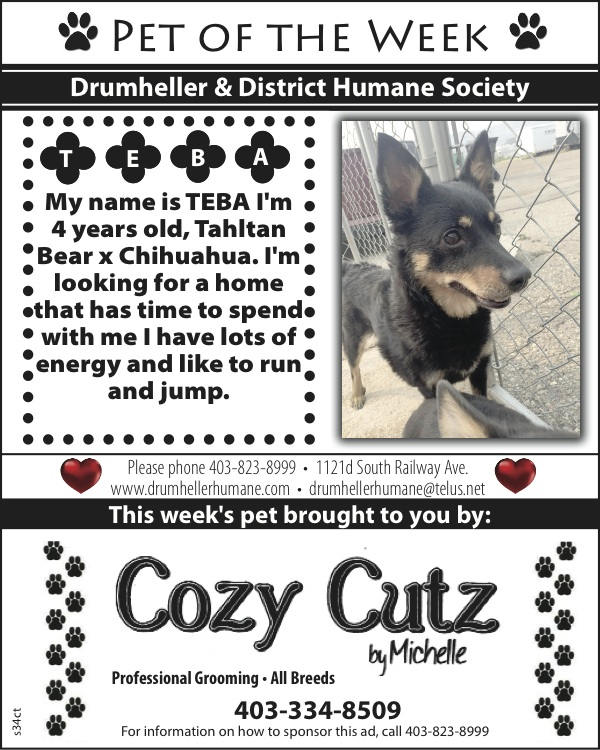 pet of the week cozy cuts