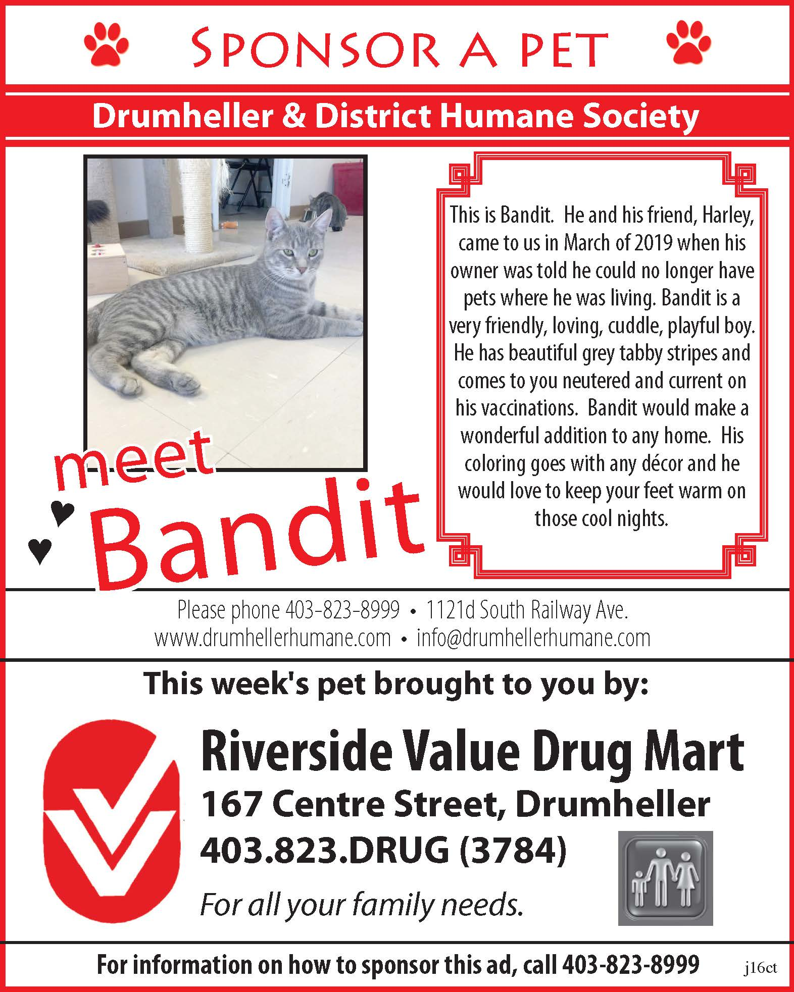 Bandit-Pet of the Week