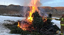 Tree Burning Bonfire - Jan 12 2019