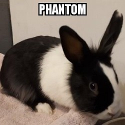Rabbits for Adoption-Phantom