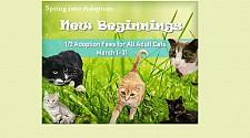 Spring into Adoption!