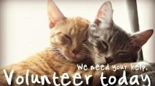 Volunteer today-We need your help
