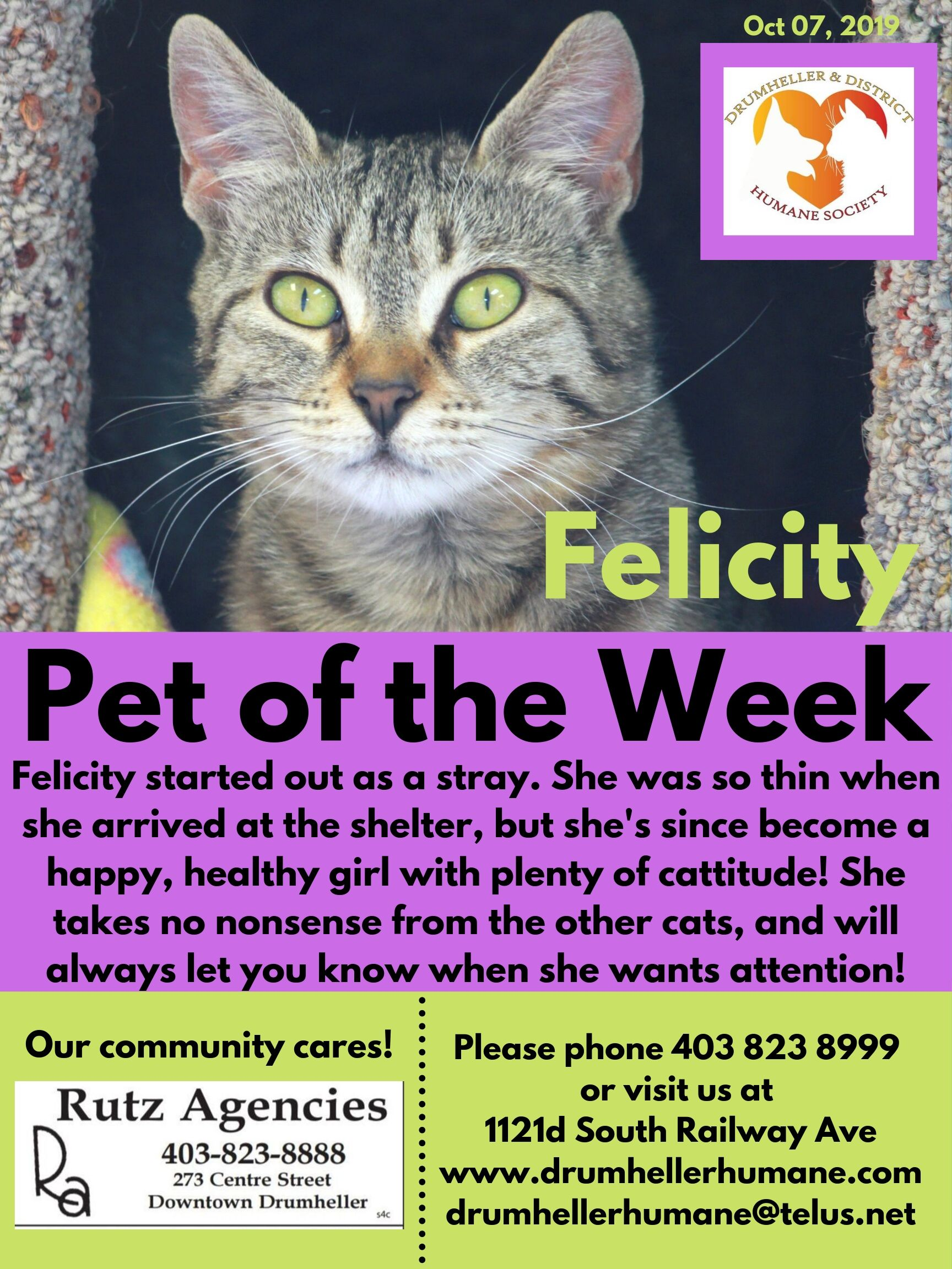 Felicity Pet of the Week