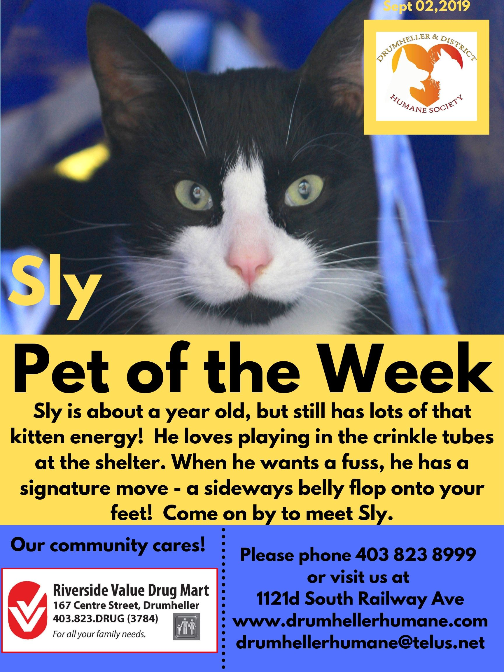Sly Pet of the Week