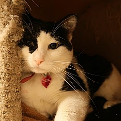 Patches (BONDED WITH MAX)